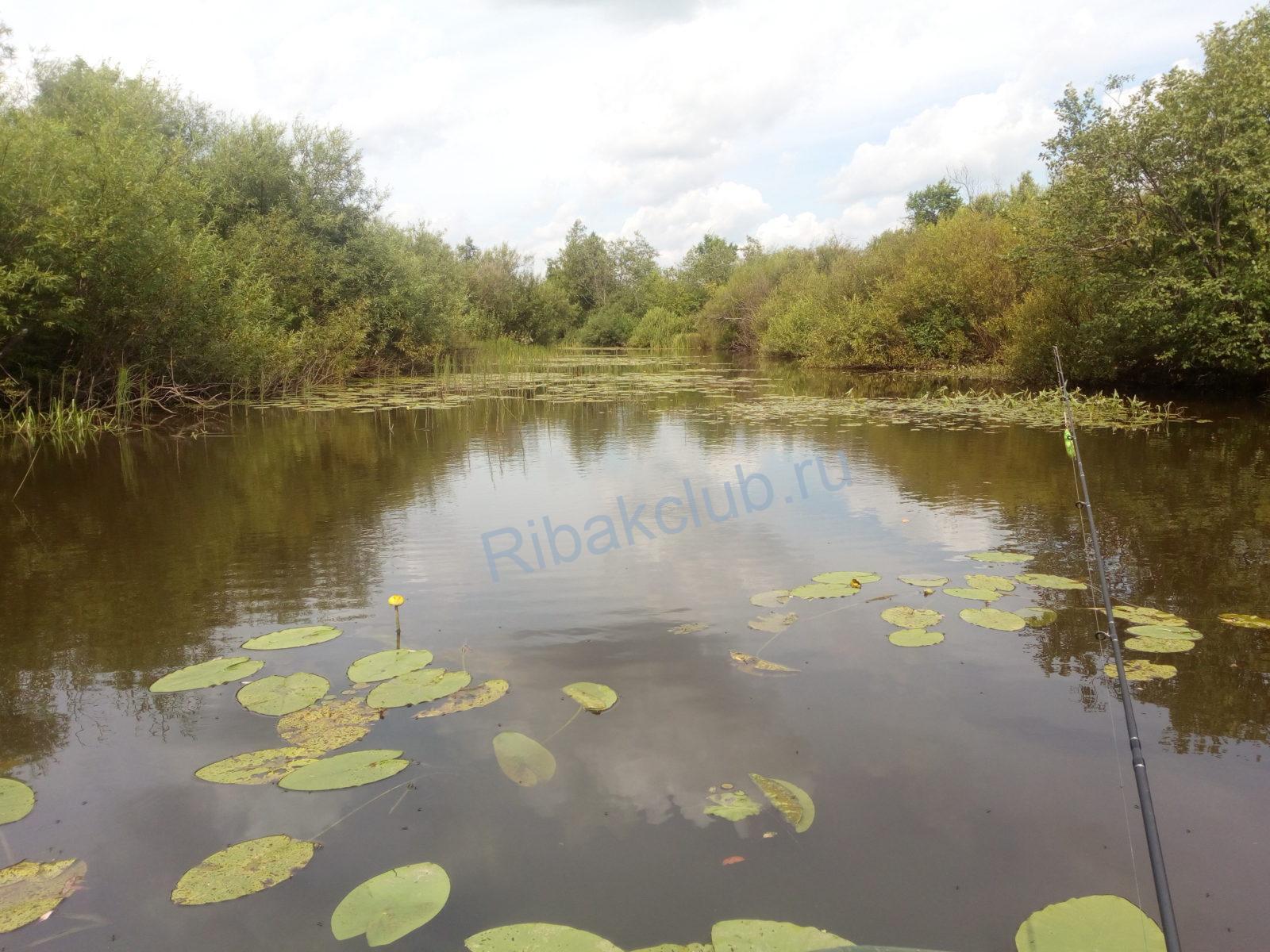 Река ИЖ-главная река Удмуртии. Видео