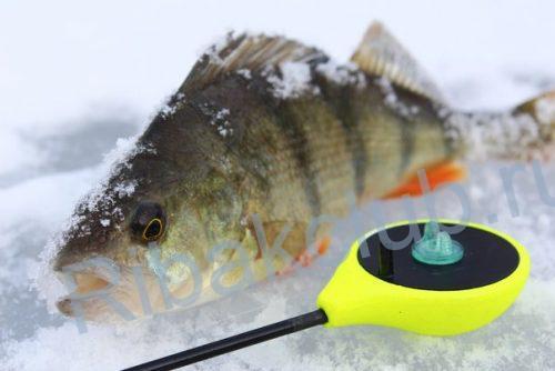 Окунь хищная рыба