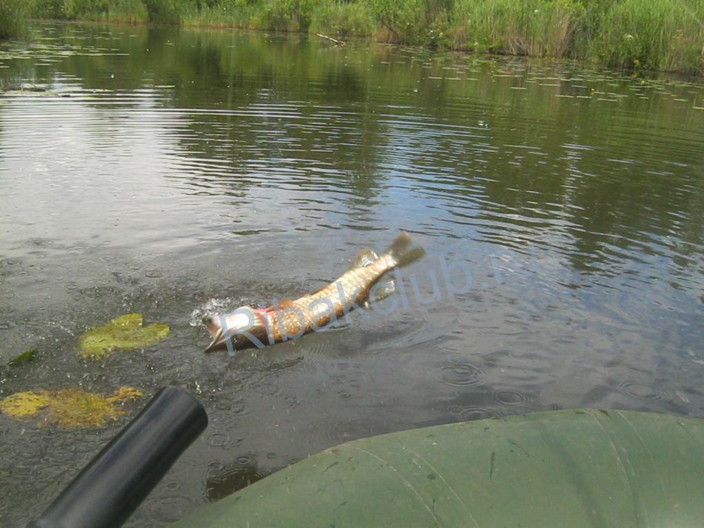 Как и где ловить рыбу