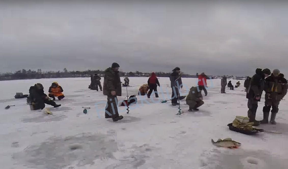 Ловля судака на жерлицу зимой — часть 3