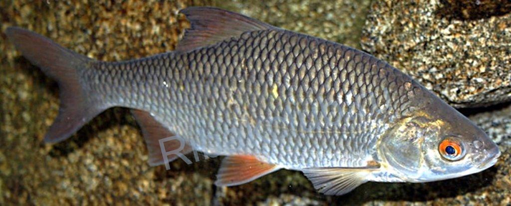 Эффективность прикорма при ловли рыбы.