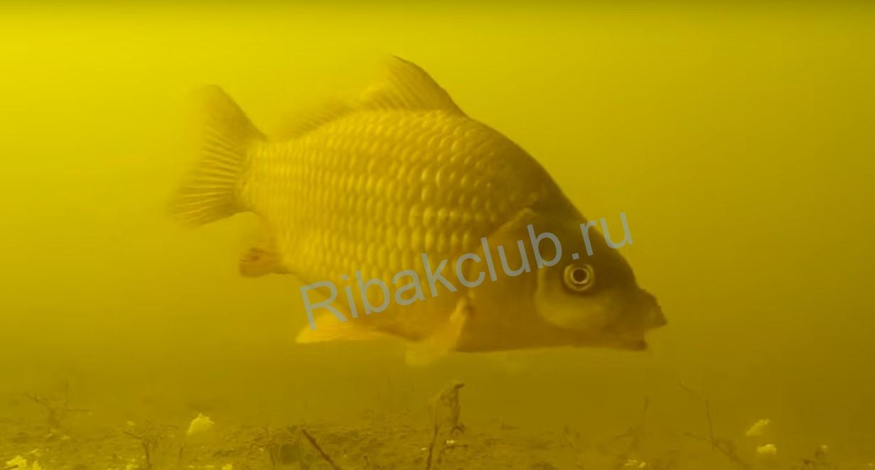 How to catch carp and where to look for carp in early spring