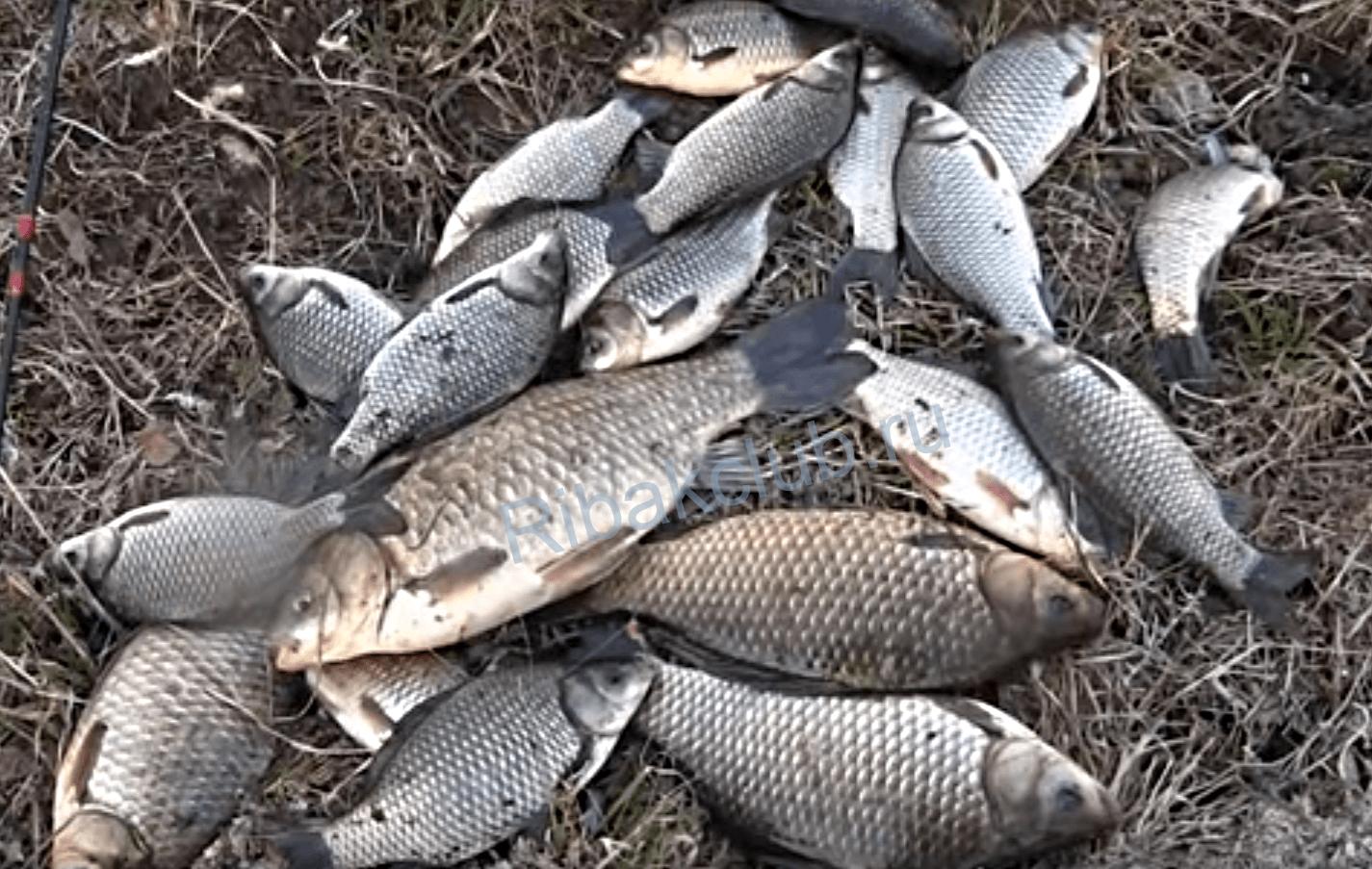 Какая рыба клюёт весной