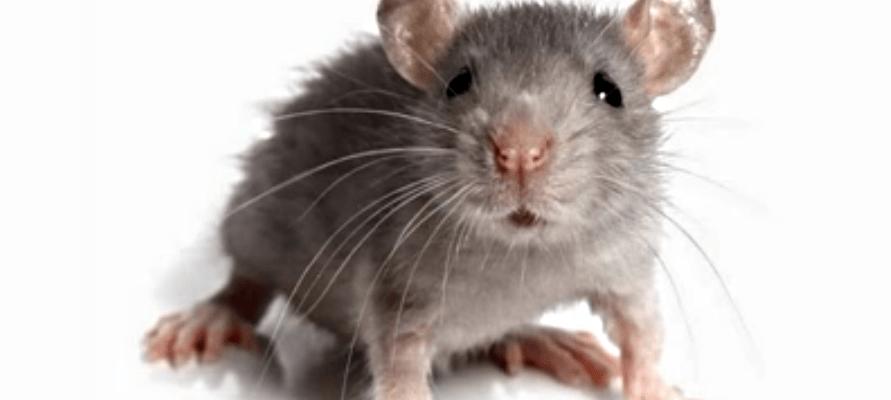 Как ловить щуку на мышь