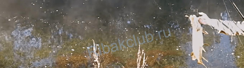 Ловля щуки в мае поплавочной снастью