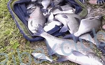 подкормка для рыбалки купить недорого