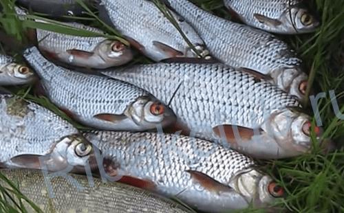 Ловля рыбы на перемёт