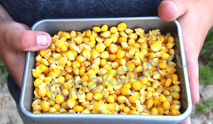 заготовка кукурузы для рыбалки