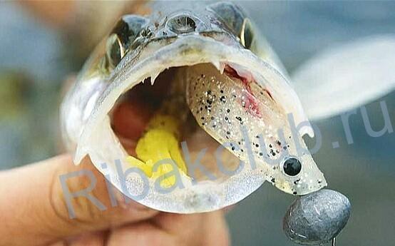 Ловля судака в марте на джиг. Способы ловли судака весной.