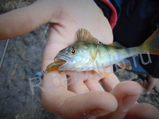 Нормы вылова рыбы. Запрещённые и разрешённые снасти для рыболова.