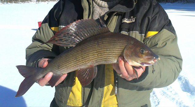 Ловля хариуса в декабре. Отличное время для рыбалки зимой.