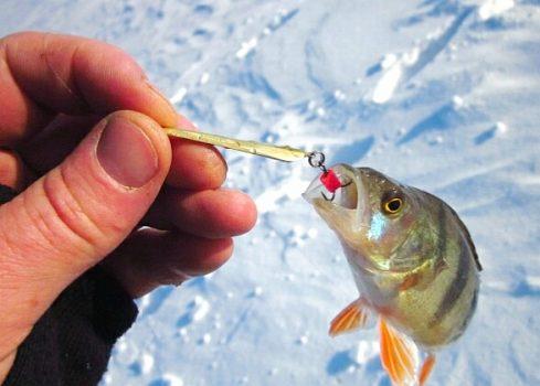 Ловля окуня зимой на донные блёсны. Эффективный и проверенный способ ловли окуня зимой.
