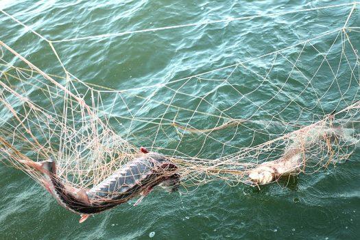 Штрафы и наказания за незаконную рыбалку в 2018 году.