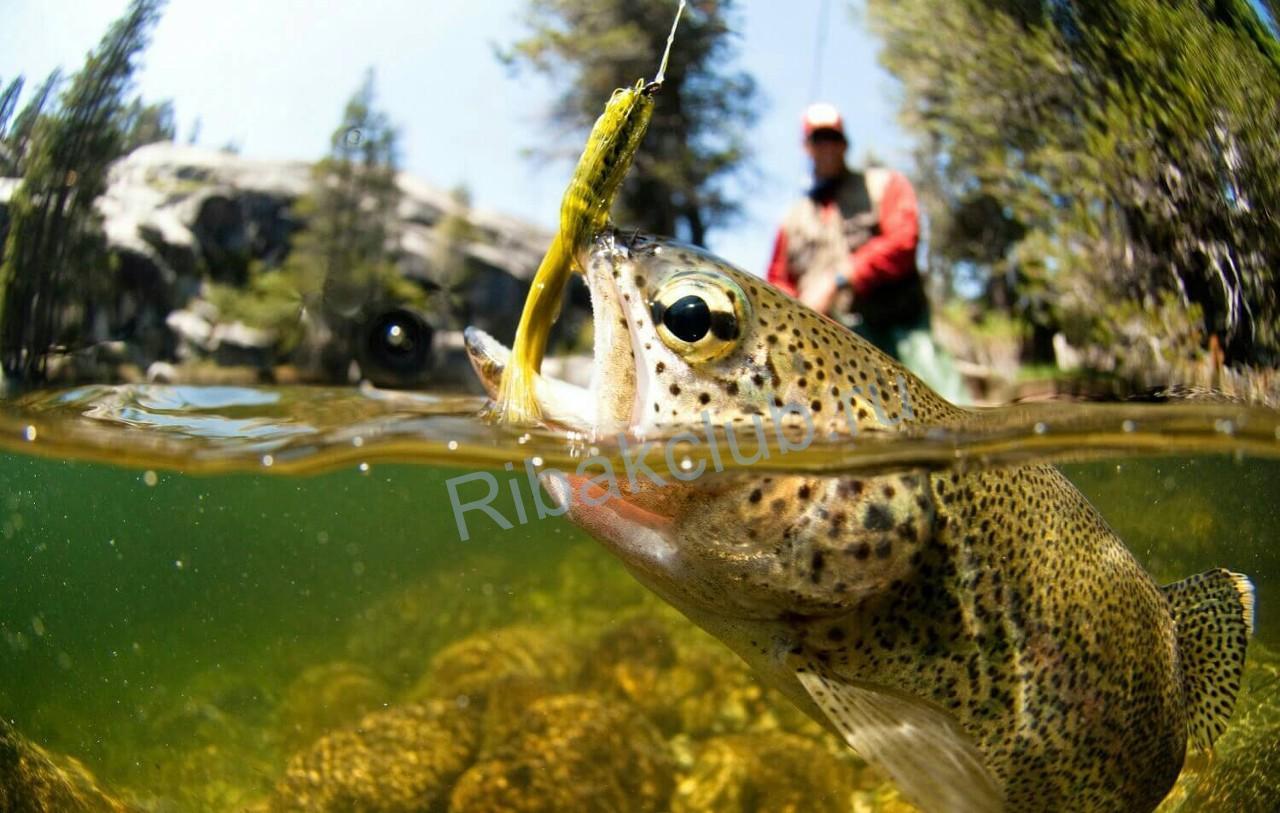Рыбалка для начинающих