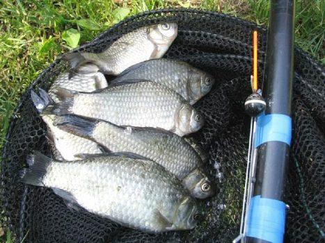 Какая рыба ловится в марте? Карась?