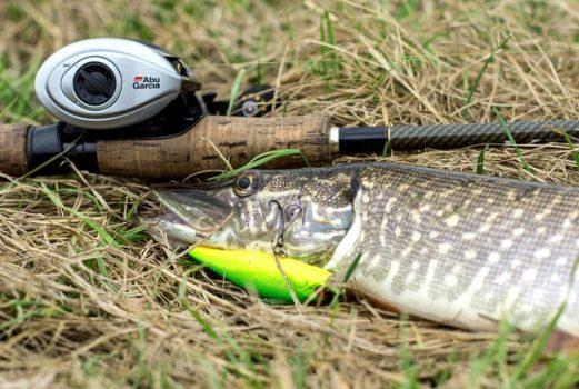 Ловля щуки весной на малых реках. Фото